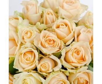 Кремовые розы Пич