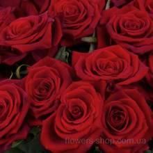 Букет из красных роз сорта Гран При, поштучно
