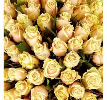 Бутоны роз кремового цвета