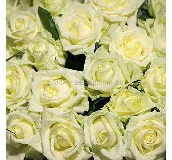 Бутоны белых роз