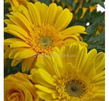 Желтые розы, герберы, ледерварен
