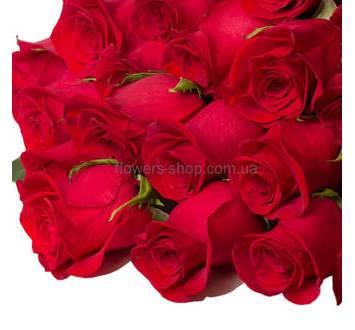 Красные розы, Фридом, бутоны