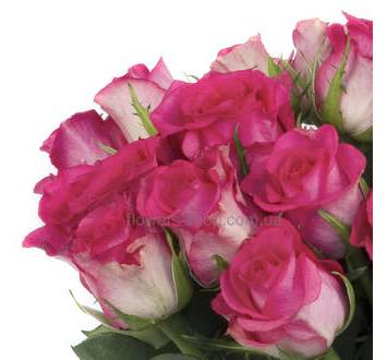 Роза Утро Парижа, поштучно
