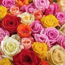 Розы разных цветов, микс, розы поштучно