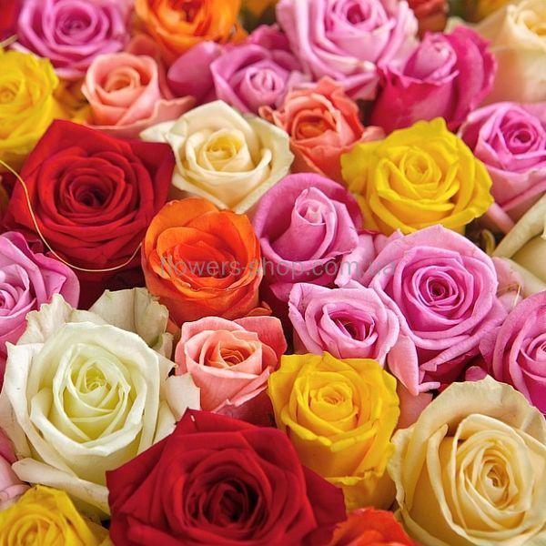 Картинки розы разноцветные