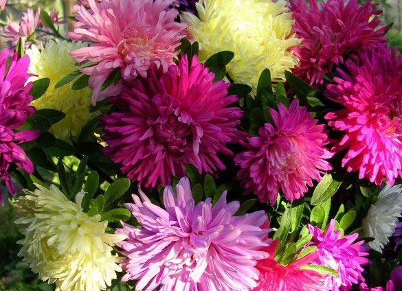 осенние цветы5