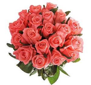 Троянди Каріна