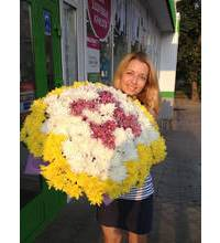 A huge bouquet of chrysanthemums with delivery Chervonograd