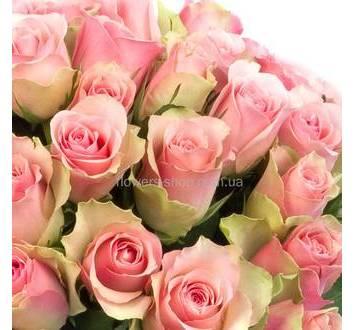 Бледно-розовые импортные розы