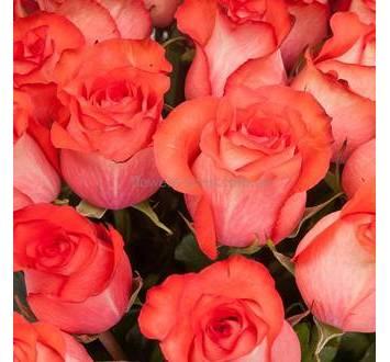 Розы красно-оранжевые импортного производства