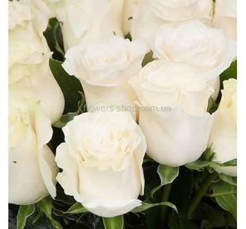 Белые розы Мондиаль