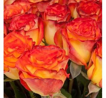 Букет из роз Циркус перевязанных лентой
