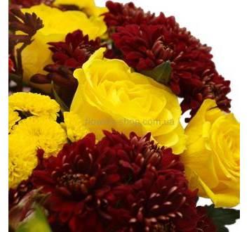 Розы Илиос, бордовые хризанетмы