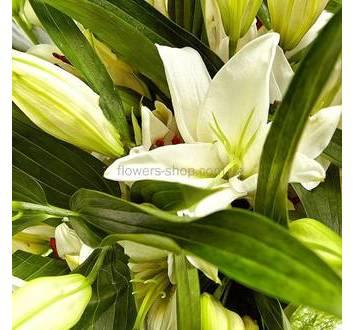 Лилии белого цвета
