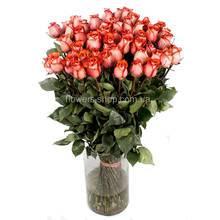Розы сорта Блаш производства Эквадор