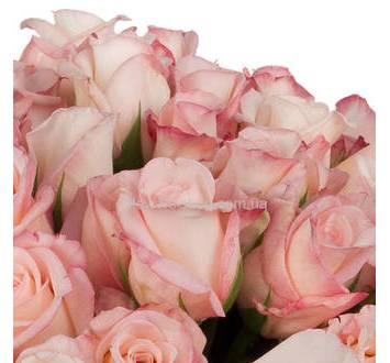 Импортные бледно-розовые розы