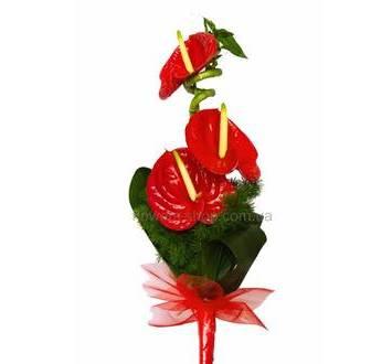 Букет из красных антуриумов, бамбука, аспидистры и зелени