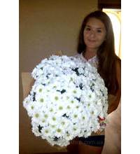 An armful of daisies 51 for girls in Kiev