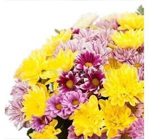 Веточные хризантемы разных цветов