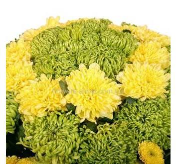Одиночные хризантемы желтого и зеленого цветов, букет с упаковкой