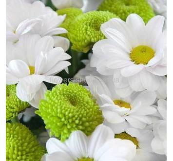 Ромашковая белая хризантема, Филинг Грин