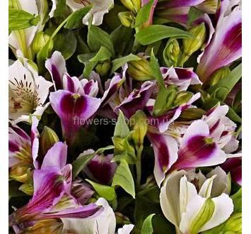 Букет из альстромерий розово-фиолетового цвета