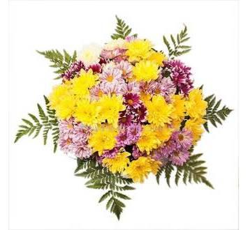 Разноцветные хризантемы, листья ледерварена, лента