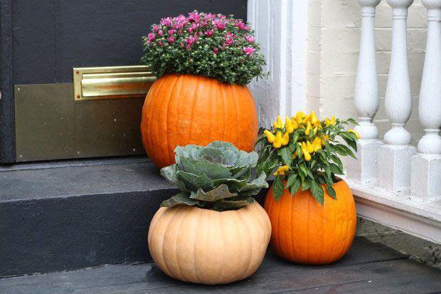 Осень цветы астры