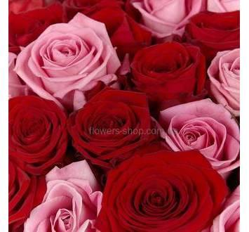 Розы сортов Аква и Гран При