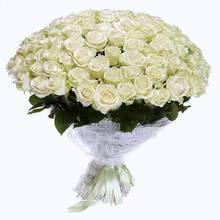rose_white_101_1.jpeg