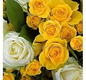 Букет из булых и желтых роз