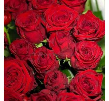 Красные розы Престиж, феникс, декоративная упаковка