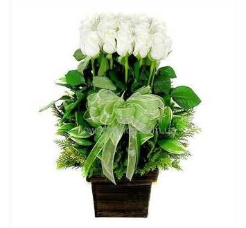 Белые розы с зеленью в кашпо