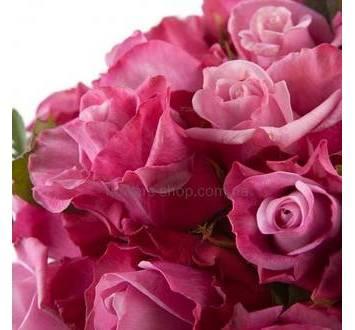 Розово-сиреневые розы Дип вотер