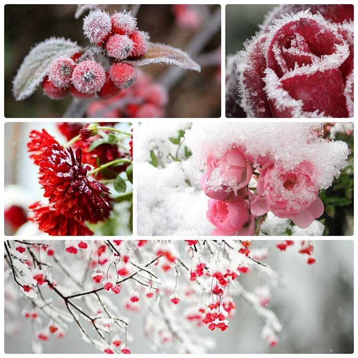 цветы зимой3
