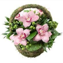 Корзина с розовыми орхидеями цимбидиум, зеленым гиперикумом и зеленью