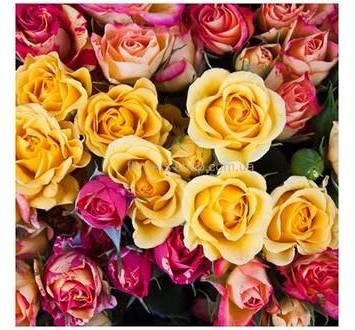 Кустовые разноцветные розы