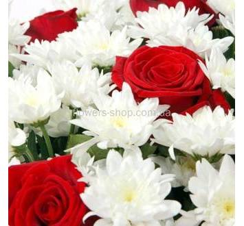 Хризантема Анастасия, красные розы