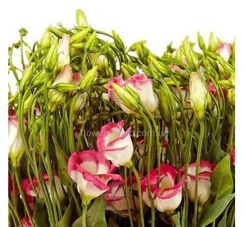 розовые эустомы - бутоны