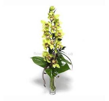 Ветка орхидеи цимбидиум
