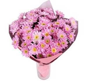 Хризантема рожева