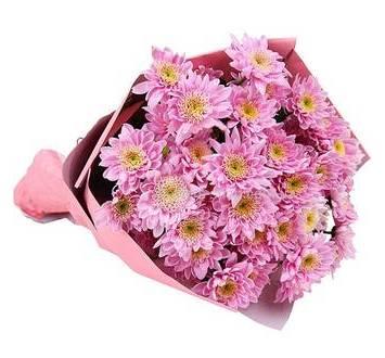 Розовые хризантемы, упакованные в бумагу