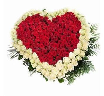 Сердце из роз красного и белого цвета с зеленью ледерварена и феникса